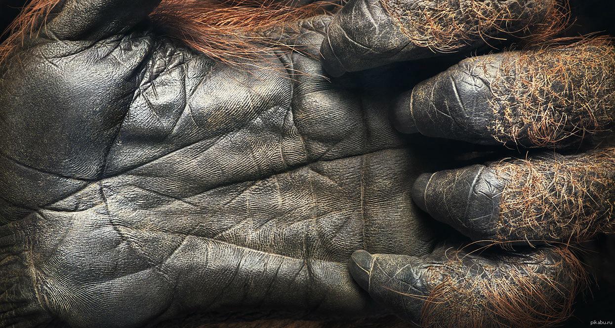 Orangutan-human hentai naked scene