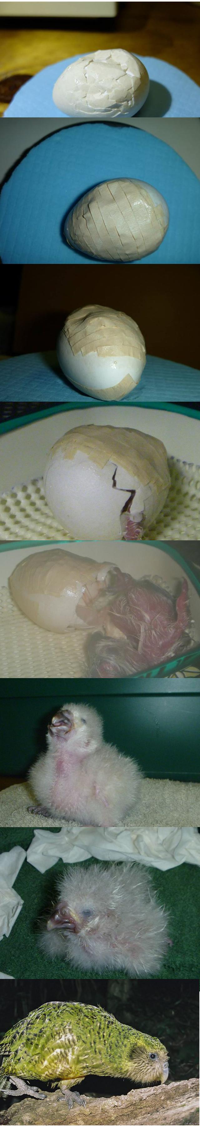 Раздавила яйца парню 13 фотография